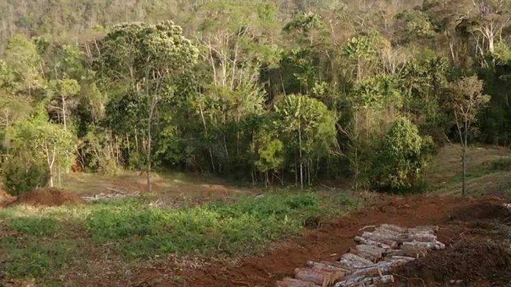 Agrofloresta da Reserva do Ibitipoca