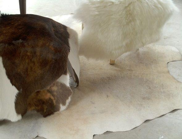 Zacht wit en kleine bruin witte vachten van kort haar. Instant sfeermakers