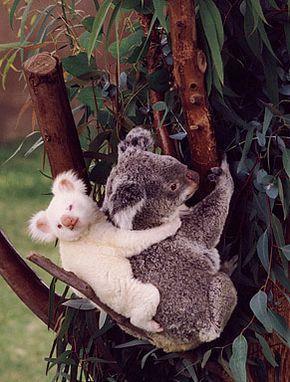 #adorable #animal 32 Entzückende Tierbilder, die du nicht missen möchtest   – Special Happy