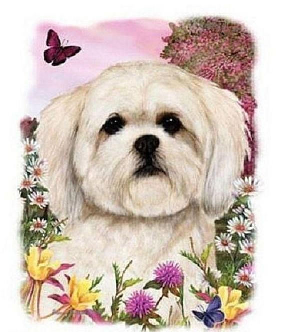 Lhasa Apso Flower Dog Womens Short Sleeve T Shirt 16597HL4