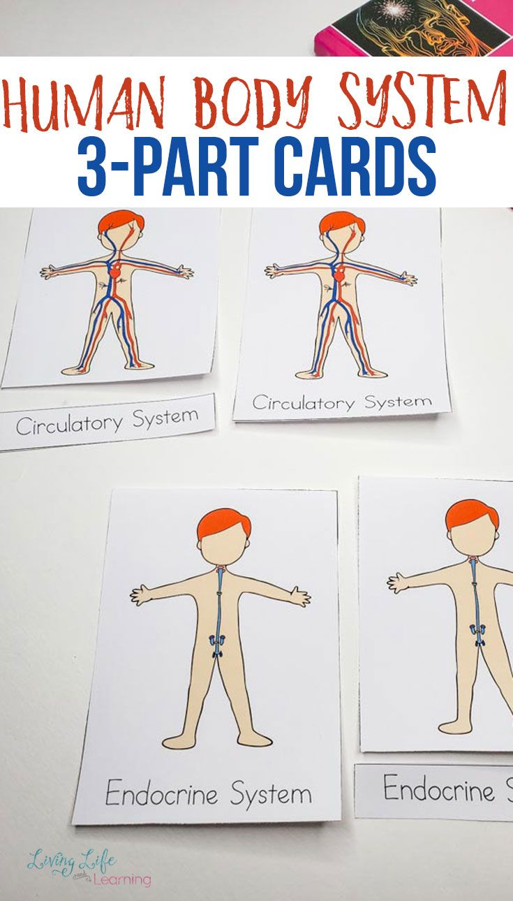 Human Body Systems Worksheets For Kids Body Systems Body Systems Worksheets Human Body Systems [ 1290 x 735 Pixel ]