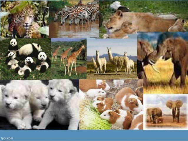 Diapositivas Niveles De Organización Externa De Los Seres Vivos Animals Cow Horses