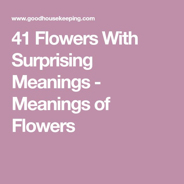 41 Flowers With Surprising Meanings - Meanings of Flowers