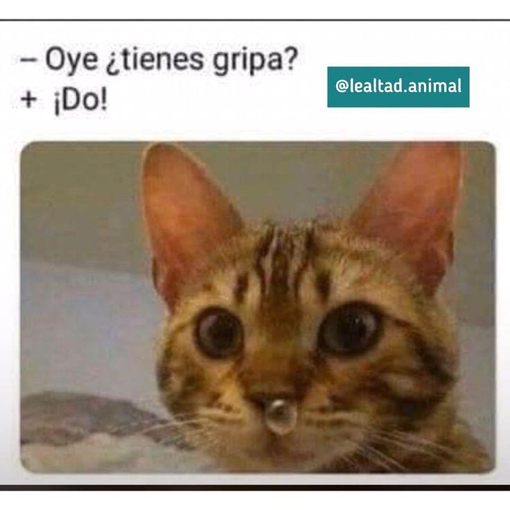 El   Sigue a Susana Lago.animal y comparte las mejores imágenes de tus animales …