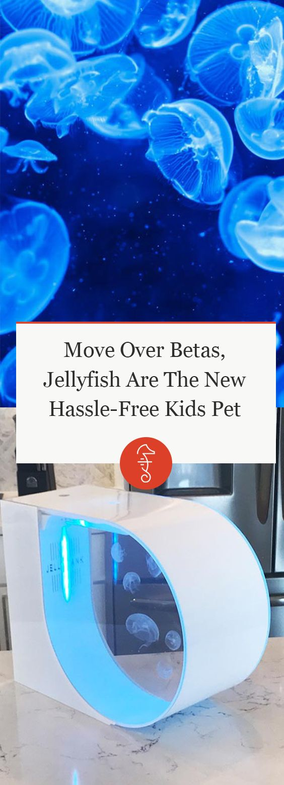 Move Over Betas, Jellyfish Are The New Hassle-Free Kids PetMove Over Betas, Jellyfish Are The New Hassle-Free Kids Pet