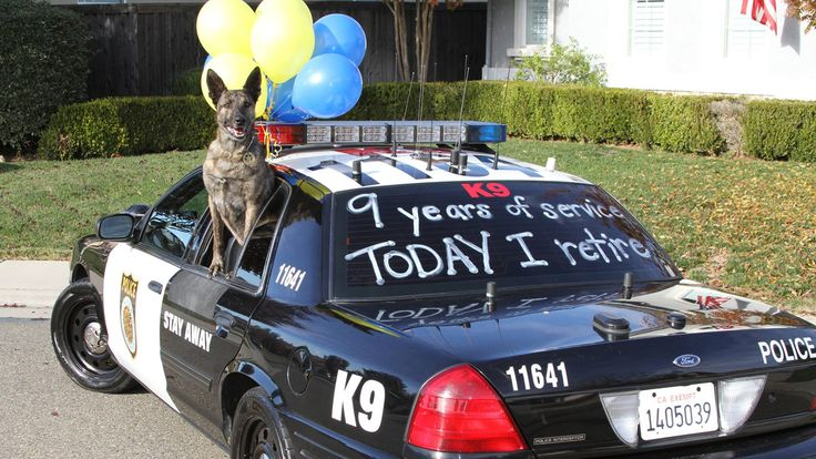 The first rescue dog who became a police K-9 is retiring. Good dog, Rollo -- enjoy the happy retirement you've earned!