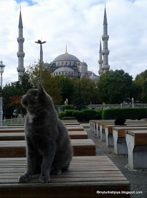 8 Hours in Istanbul ~ My Traveling Joys