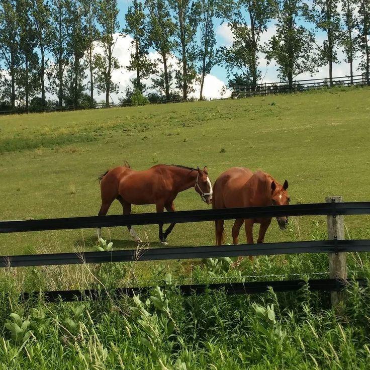 #Horses and beautiful skies in #elora.
