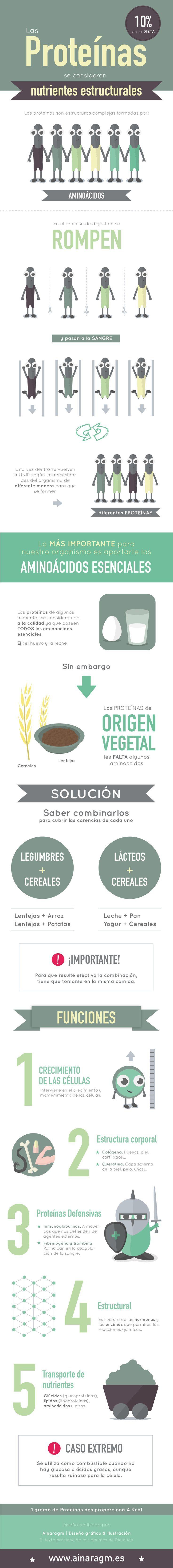¿Que son las proteínas y cuáles son sus funciones? #infografia #proteinas
