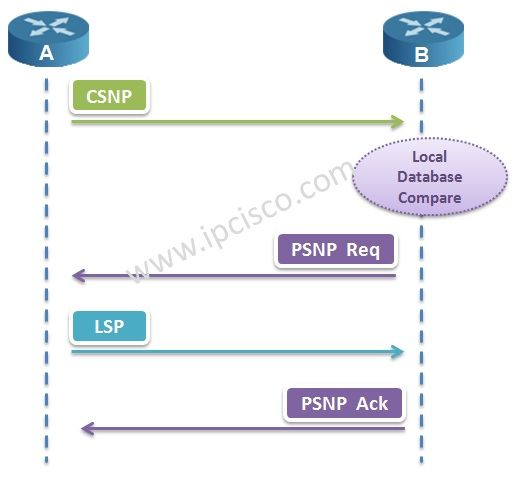 IS-IS CSNPs and PSNPs