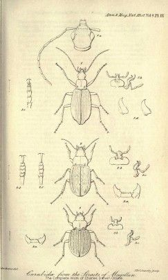Image result for charles darwin sketches