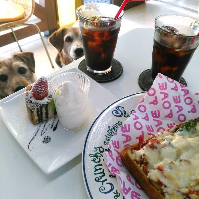 ★2017.05.05  今日は ココも一緒に☕  やっぱり姉妹。 行動かぶるかぶるww . . #ドッグラン#ドッグカフェ#犬と一緒#犬との暮らし#犬#愛犬#コーヒー#カフェ#のんびりタイム#ビーグル#ビーグルミックス#ミックス犬#雑種犬#中型犬#dog#dogstagram