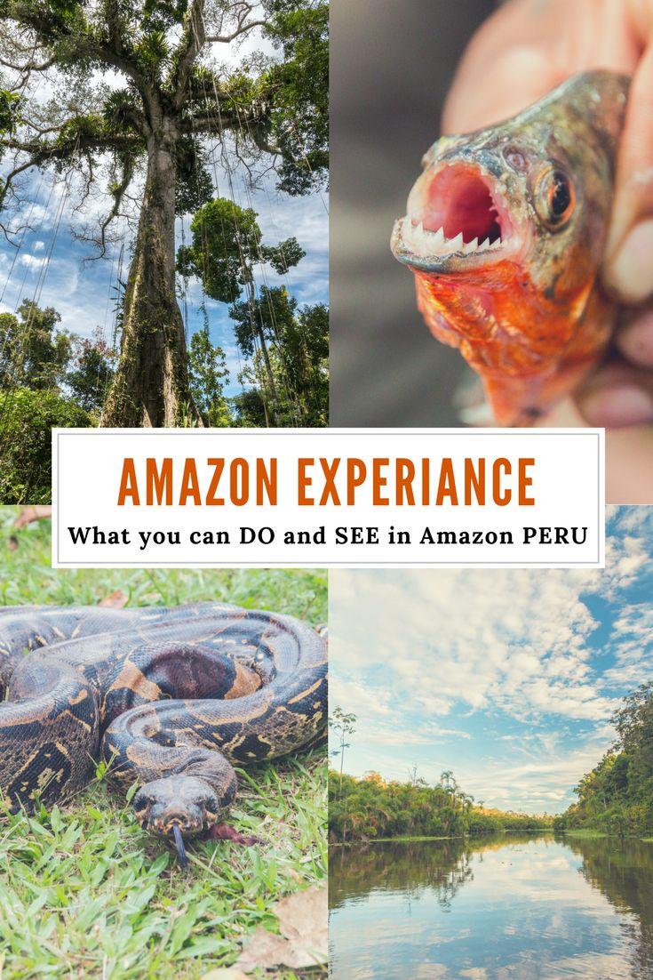 Explore the amazon jungle peru trip advisors - Amazon Jungle In Peru Is One Of The Most Conservative Parts Of The Whole Amazon
