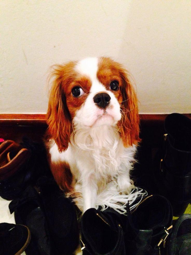 Můj Pejsek Charlie/My Dog Charlie19.2.2015