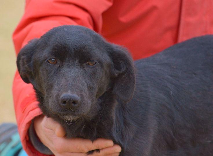 Adopter Moyen chien Junior - Galgos France - Lot-et-Garonne - Chien croisé moyenne race - SecondeChance.org