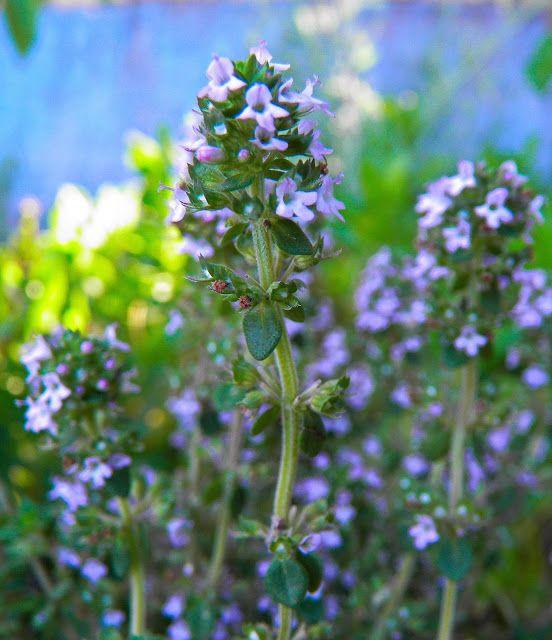 M  o   m   e   n   t   s   b   o   o   k   .   c   o   m: Με τα βότανα ο κήπος γεμίζει αρώματα αιθέριων ελαί...