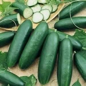 cucumber seeds for sale