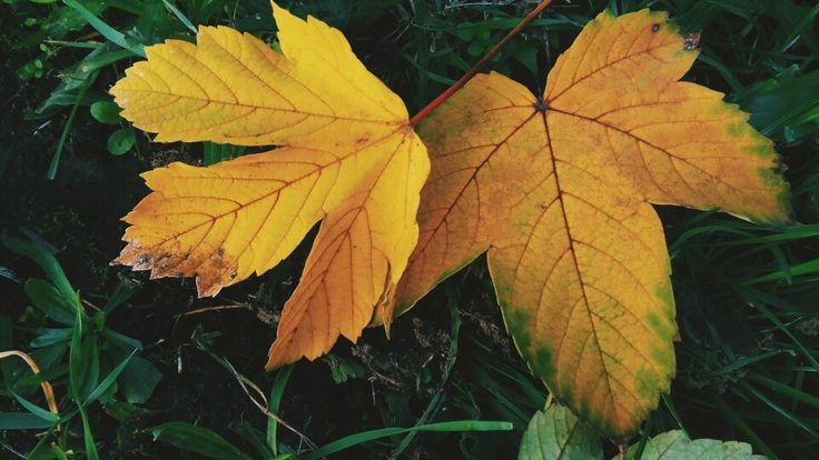 #nature #autumn #brrr