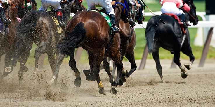 What is the life of a racehorse really like? And what of the thousands of horses that fail to 'make the grade'?  STOP THE SLAUGHTER !!