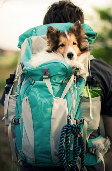I need a bag like this for Khaleesi. Her little legs get tired much quicker than her sisters' do.