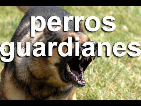 Los 5 mejores perros guardianes del mundo.