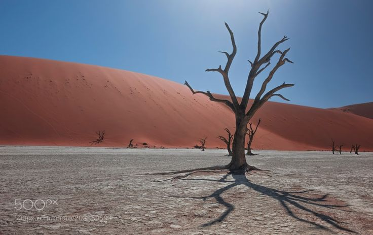Shadows & Light - I've pictured deadvlei in different type of shots At the sunrise light created fantastic play of shadows and light. i've been using here for the first time the Zeiss Milvis 21mm