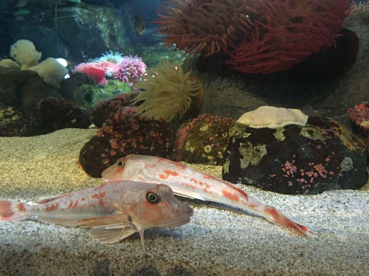Jeju Aquarium, Jeju, South Korea
