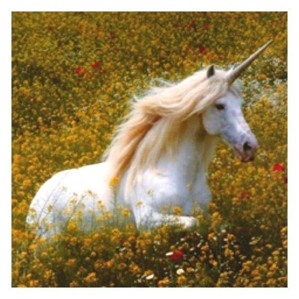 30 best unicorns images on Pinterest | Unicorns, Unicorns ...