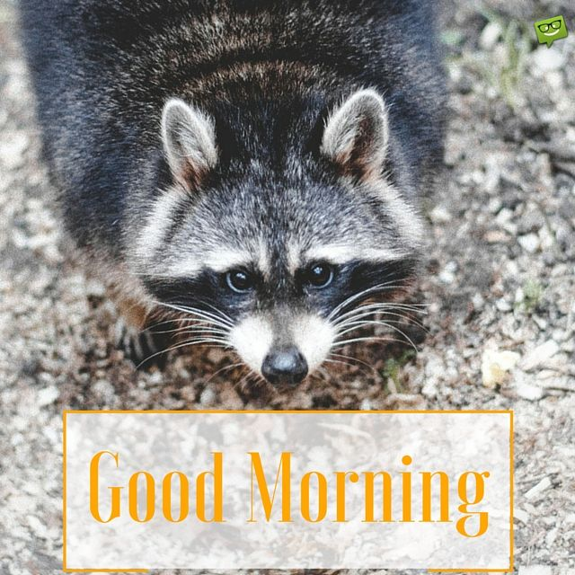 Happy Good morning image with very cute animal