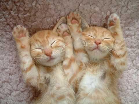 Little twin kittens even sleep alike. Cuteness, double cuteness.