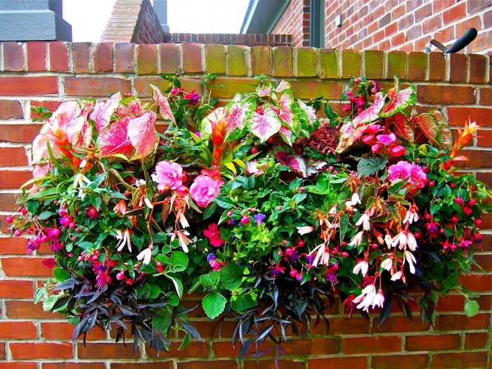 Flowers For Hanging Baskets In Part Shade : Best images about hanging baskets shade planters on