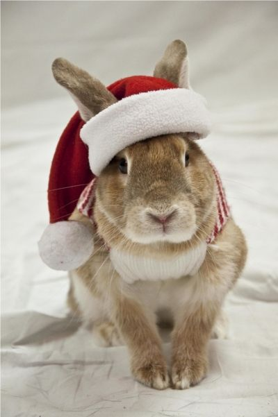 Cenza would never wear this but I kinda want to make it & try it on him anyways!!! Christmas Bunny Rabbit
