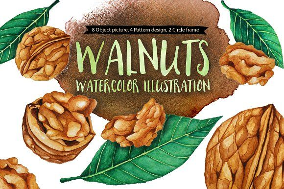 Walnuts Illustration Watercolors by andypray on @creativemarket