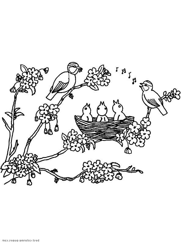 Bird Nest on Blooming Flower Three