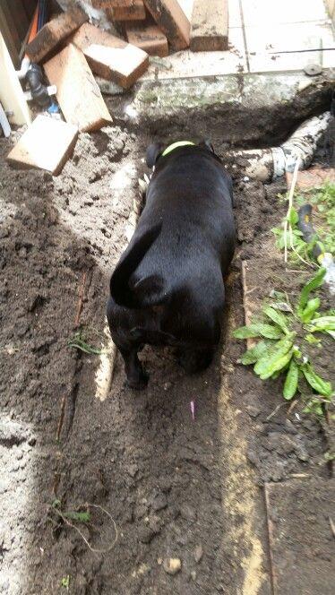 I'll help you dig dad!!!