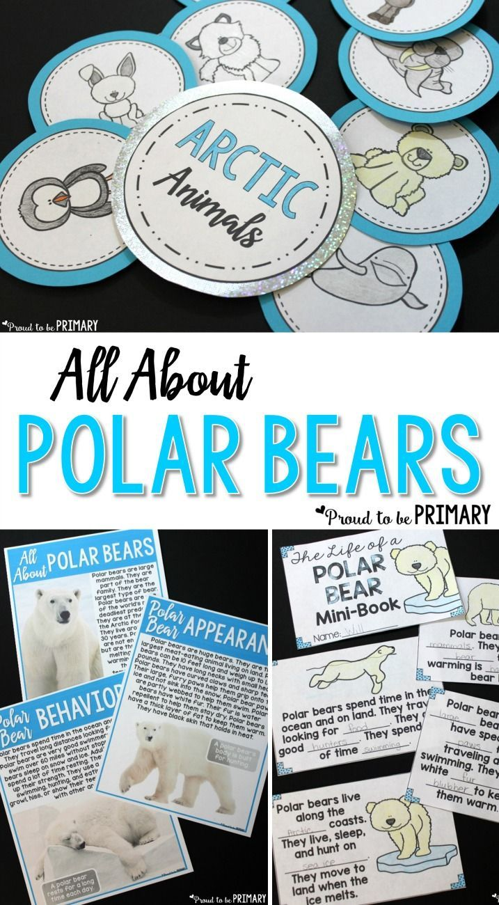 All About Polar Bears has everything you need to teach polar bears. Tons of science and non-fiction ELA activities, printables, and materials. Teach the parts of a polar bear, research and writing, the life cycle of a polar bear and cub, fact posters, vocabulary, arctic animals craft, and more!