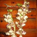 Fight Flu Naturally With Raw Garlic & Ways To Eat Raw Garlic