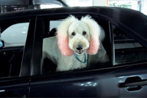 【特別公開】町田康『スピンク日記』「私はスピンクといいます。犬です。小説家の主人・ポチと楽しく暮らしています」(町田 康) | 現代ビジネス | 講談社(4/4)
