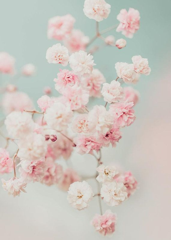 Baby S Breath Photography Gypsophila Print Flower Print Floral Photo Dreamy Pastel Pink Flowers Pink Flowers Wallpaper Flowers Photography Flower Aesthetic