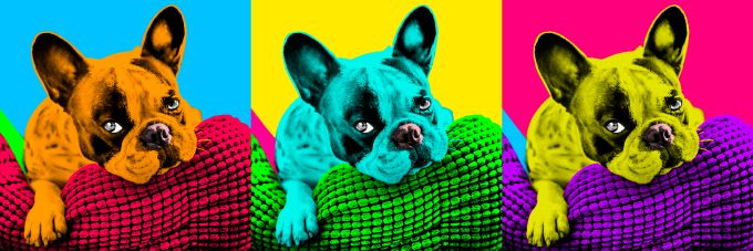 make pop Art Andy Warhol of your pet within 24 hr