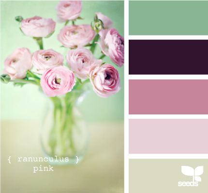 ranunculus pink design seeds hues tones shades  color palette, color inspiration cards