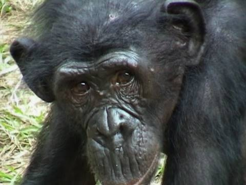Top 10  Endangered Animals