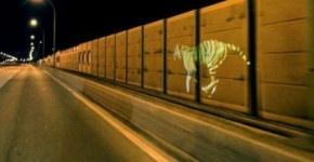 La ballade d'un tigre en street mapping