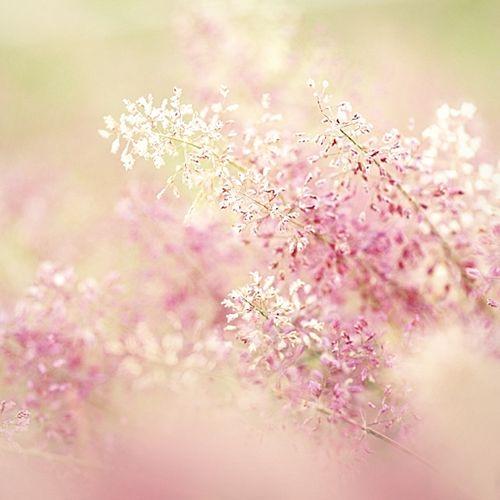 livraisons de fleurs pas cher 460 fleurs bouquet photos fleurs pinterest fleurs pas cher. Black Bedroom Furniture Sets. Home Design Ideas