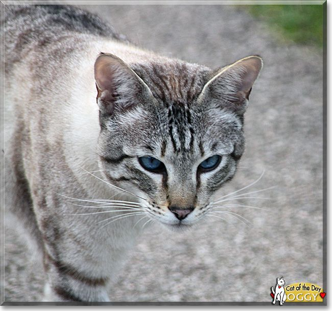glucosamine and chondroitin for cats