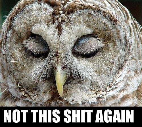 funny owl memes - Google Search