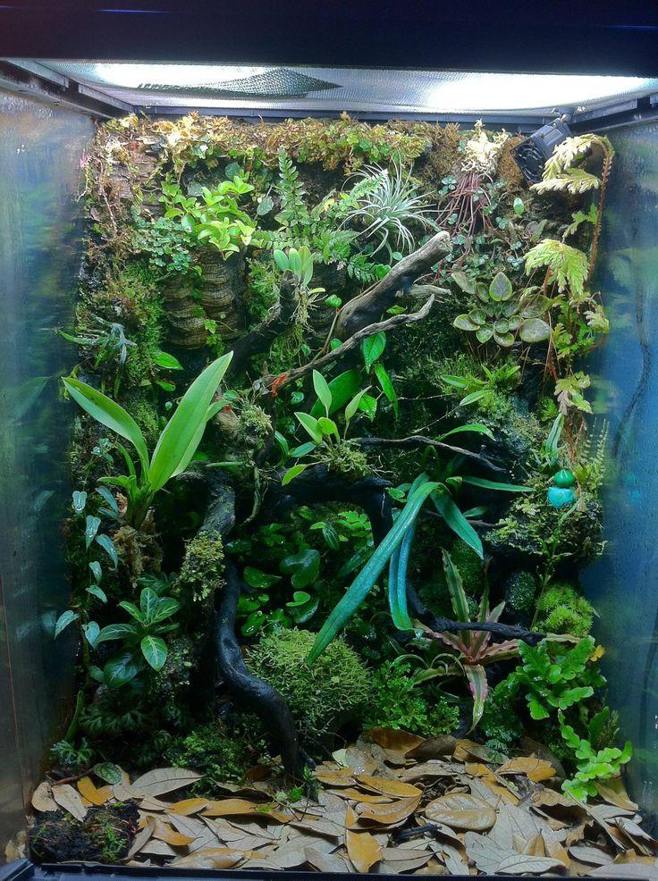 57 best Vivariums | Crested Geckos | Dart Frogs images on ... 10 Gallon Dart Frog Vivarium
