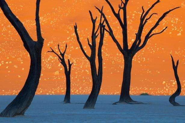 アフリカ・ナミビアのナミブ砂漠にあるこの世のものとは思えない死の沼地「デッドフレイ(Deadvlei)」 - DNA