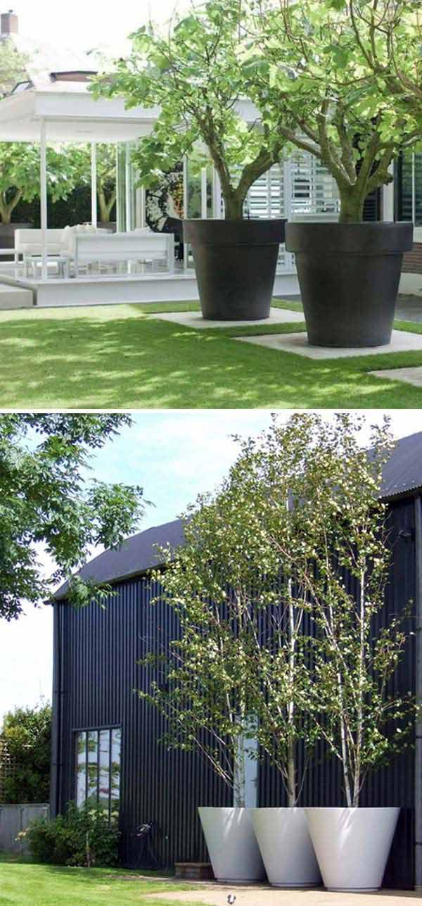 #8. Oversize tree planters would be great addition to the garden.