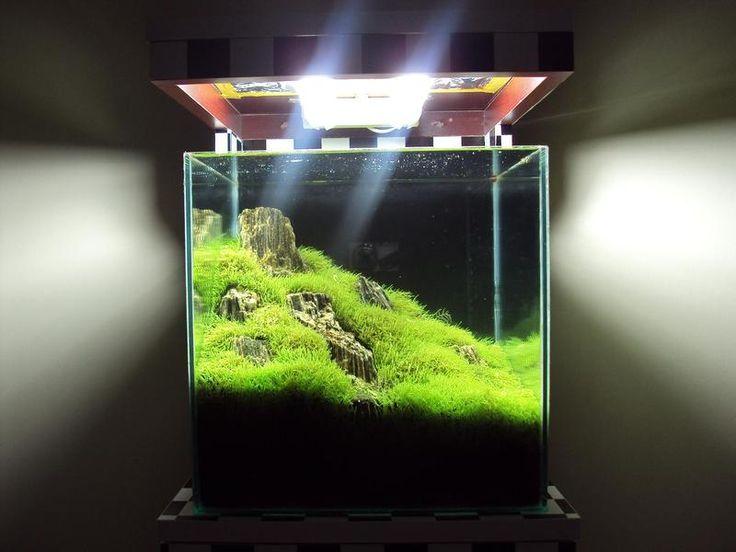 Bill's 5 Gallon - A Rimless Treescape Build - Page 7 - Aquarium Advice - Aquarium Forum Community